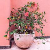 Plant on pink. Flowers.  Fashion street location - 206122806