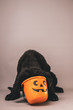 Newfoundland puppy with its head inside of a jack o lantern candy bucket against a grey seamless background
