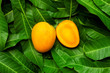 Mango fruit isolated on green leaf background top view - 206173800