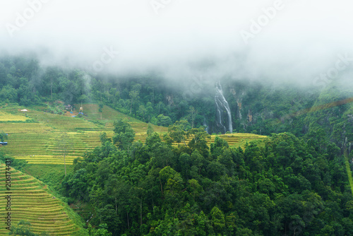 Fotobehang Olijf Terraced rice field landscape in harvesting season with low clouds in Y Ty, Bat Xat district, Lao Cai, north Vietnam