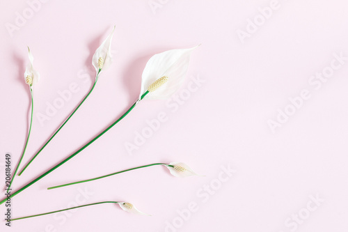 Flowers composition. Tropical flowers on pastel pink background. Flat lay, top view - 206184649