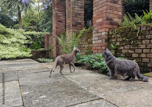 Aluminium Kangoeroe Adventures of a kitty in the garden: Lilac Oriental Shorthair cat