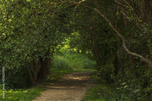 Aluminium Weg in bos camino con árboles formando una entrada