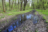 puddle on road in forest - 206221461