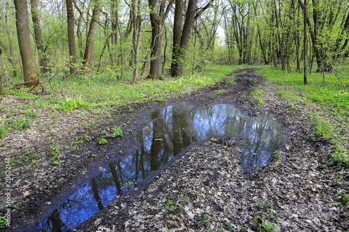 Foto Spatwand Lente puddle on road in forest