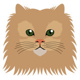 Avatar of a cat. Cat breeds