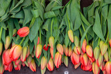 Orange tulips for sale at a market - 206250401