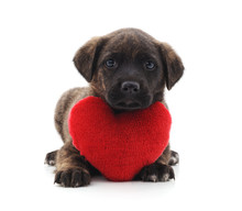 One Little Dog  A Red Heart Sticker