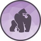Gorilla, monkey, animal - 206300684