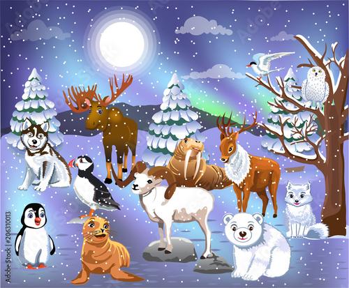cartoon collection of arctic animals