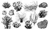 Hand drawn collection of corals reef plants - 206321661