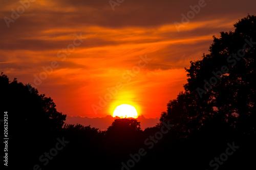 Fotobehang Baobab Old oak and beautiful sunset