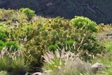 Gran Canaria nature, Spain - 206339661