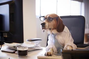 Beagle Dressed As Businessman Works At Desk On Computer