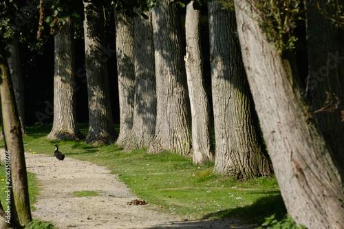 Fotobehang Weg in bos arbre allée drève bois nature