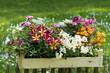 Verschiedene Sommerblumen in Holzkiste