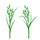 Grass seeds. Vector illustration of an isolated on white background. - 206381624