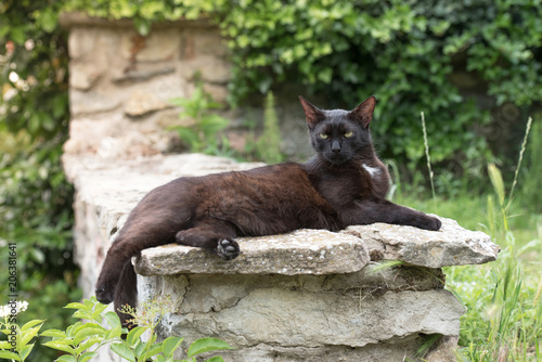 Plexiglas Kat Domestic black cat is laying on the stone wall