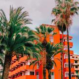 Palm location. Canary Island - 206389204