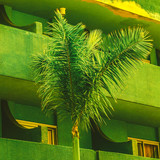 Palm tree on green. Tropical location - 206389250