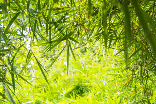 Aluminium Bamboe green bamboo leaves background