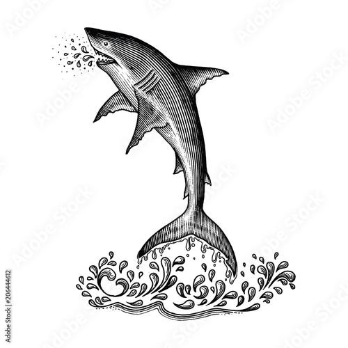 Fototapeta Shark jumping hand drawing vintage engraving style