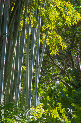 Aluminium Bamboe Bamboo trunks. Green leaves are lit by the sun, background.