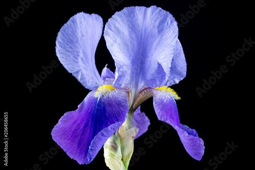 Aluminium Iris Purple Iris Flower