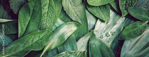 Liście leaf tekstury zielonego organicznie tła przygotowania makro- closeu