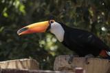 birds, exotic birds - 206479802