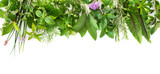 Fresh garden herbs isolated on white background - 206480084