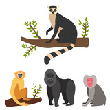 Monkey character animal different breads wild zoo ape chimpanzee vector illustration.