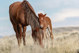 Wild Mare and Foal - 206507251