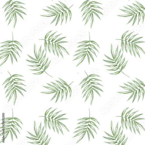 Tropical seamlless pattern with exotic palm leaves. Seamlless pattern tropic leafs on white background - 206512810