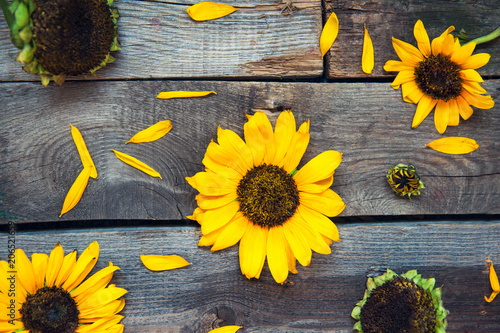 Top view Yellow sunflowers and petals on wooden rustic background of old fence. Agriculture harvest concept. Selective focus, space for text.