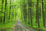 Forest trees. nature green wood sunlight backgrounds - 206530059