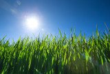 Green grass against the blue sky - 206530256