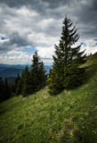 a dramatic landscape with spruces on a meadow