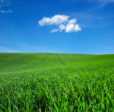 field of green grass and sky - 206552299