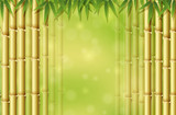 Green Bamboo in Nature Template