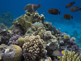 Coral colony and coral fish - 206575265