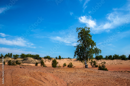 Aluminium Blauwe jeans trees in the sands. desert landscape with blue sky.
