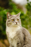 Grey and white cat sitting outdoors - 206582466