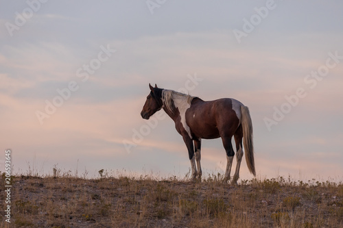 Wild Horse in a Desert Sunset