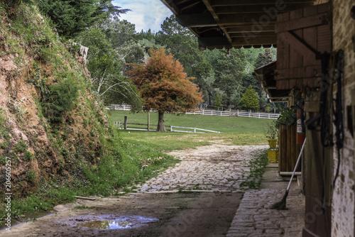 Fotobehang Weg in bos FAZENDA CAVALO PASTO