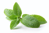 twig of mint leaves isolated on white background - 206616638