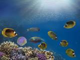 Marine Life with jellyfish - 206650217