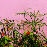 Plant on pink concept. Tropical Green fashion mood - 206679872