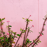 Plant on pink fashion. Plant lover mood - 206679886