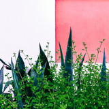 Tropical green in urban location. Plant on pink concept. - 206680076
